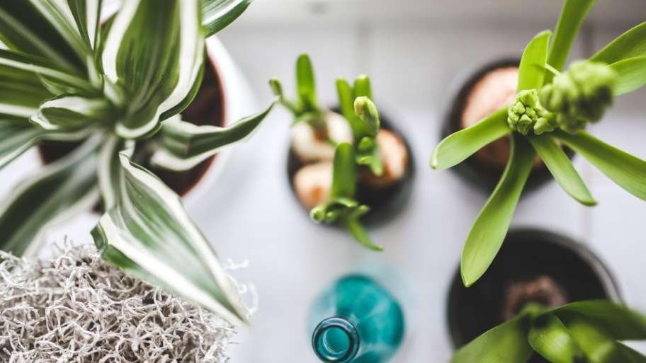 Die Pflanzen, die helfen, die Luft zu reinigen