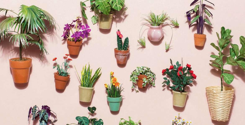 Welche Pflanzen werden Ihr modernes Zuhause mögen