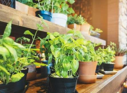 Tipps zum Einrichten von Innengärten
