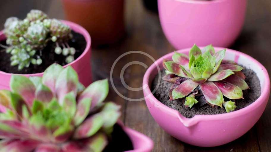 Plants for Dark Spots